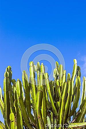 Free Cactus Under Blue Sky Stock Image - 59270751