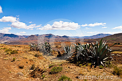 Cactusus in a desolate mountain landscape