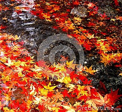 Caída del otoño