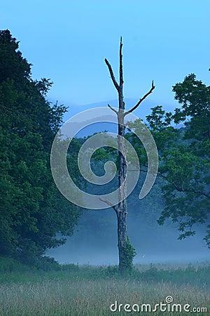 Free Cades Cove Twilight Royalty Free Stock Image - 202736