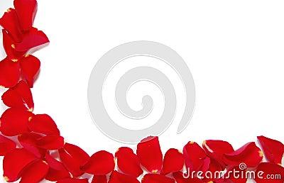 cadre rouge de p tale rose photo libre de droits image 12245095. Black Bedroom Furniture Sets. Home Design Ideas