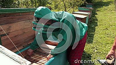 Cadres d'une ruche d'abeilles, apiculteur en vert vêtement spécial récoltant du miel banque de vidéos