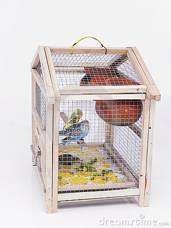 A cage with birds