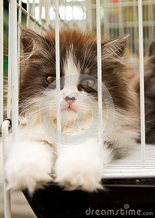 Free Caged Stock Image - 32314611