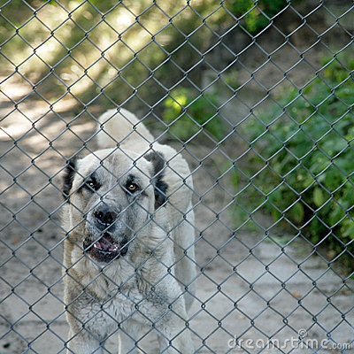 Free Caged Dog Royalty Free Stock Images - 4758149