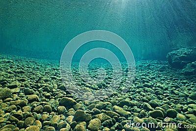 rivires et lacs sous marins deau douce de poisson deau douce de scne photo stock image 72162939 - Lit A Eau Avec Poisson