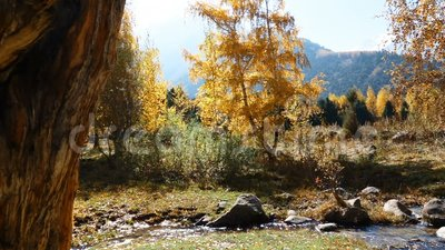 Cala de la montaña durante otoño almacen de video