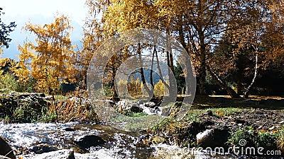 Cala de la montaña por los árboles del otoño almacen de video