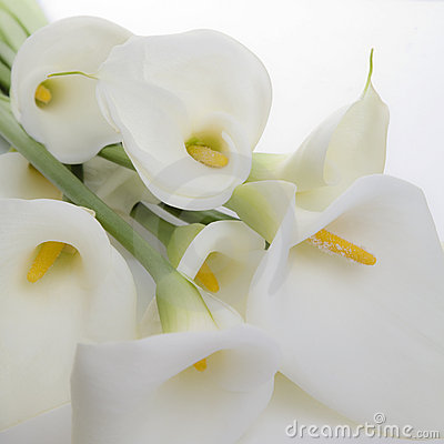Free Cala Lily Bunch Royalty Free Stock Images - 13245279