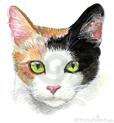 Calico Cat Illustration