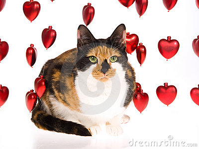 Calico cat with strings of red hearts on white