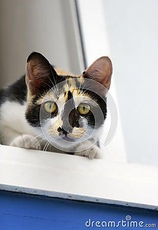 Calico Cat on windowsill