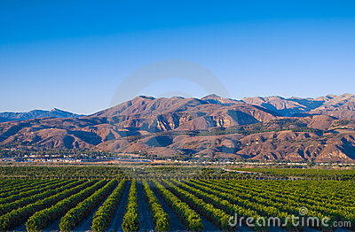 California Citrus Groves