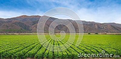 California Crop Fields