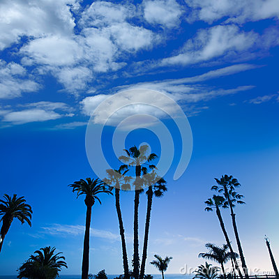 California high palm trees silohuette on blue sky