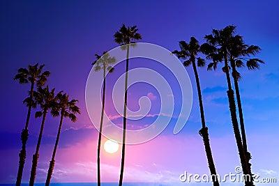California high palm trees sunset sky silohuette background USA
