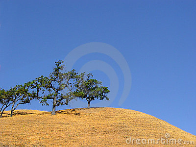California hills and trees