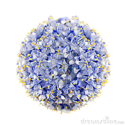 California Lilac Blue Shrub Isolated on White