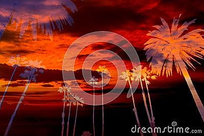California palm trees sunset sky silohuette photo mount