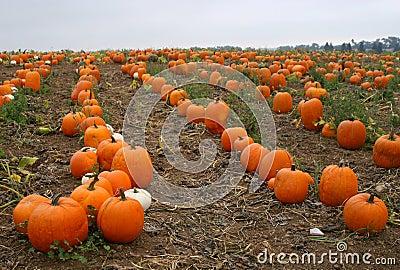 California Pumpkin Patch