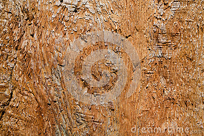 California redwood trunk closeup