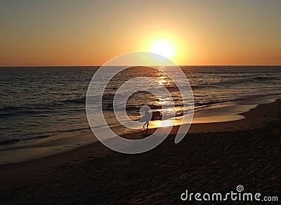 California surfer sunset
