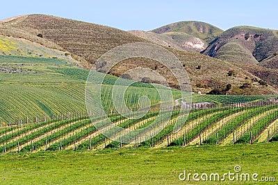 California Winery 2