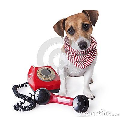 Call center dog phone