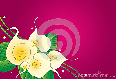 Calla lily floral background