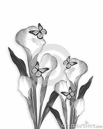 Calla lily pencil sketch drawing