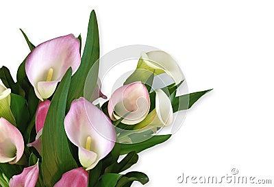 Calla Lily pink Corner design