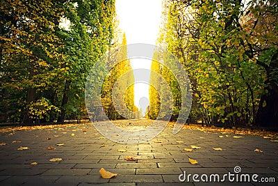Callejón hermoso del parque en otoño