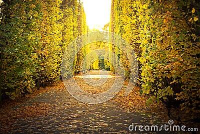 Callejón hermoso en el parque otoñal amarillo