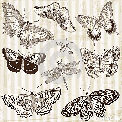 Calligraphic Butterfly Design Elements
