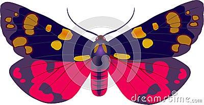 Callimorpha moth