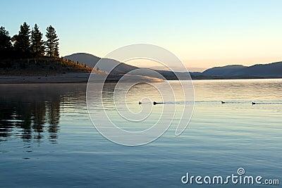 Ducks on lake at morning