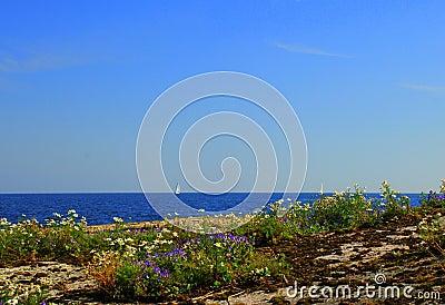 Calm rocky coast with flowers