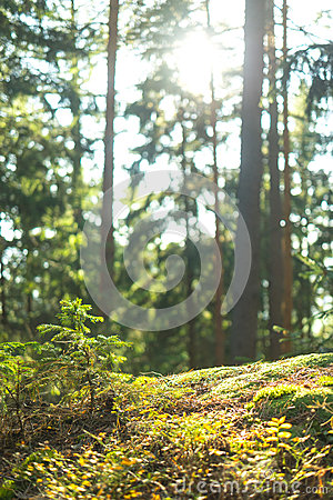 Free Calm Tranquil Forest Scene Royalty Free Stock Images - 69875789