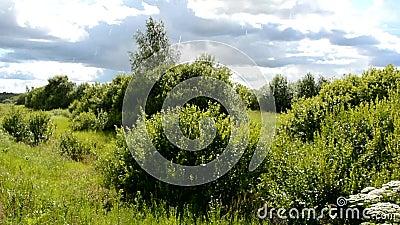 Calma, calma pioggia nella foresta Bellissima natura in un giorno di pioggia Piogge picchiate sulle foglie dei cespugli Cielo blu stock footage