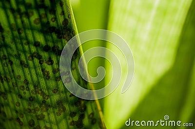 calming green series royalty free stock photos image