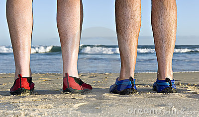 Calves and feet on the beach
