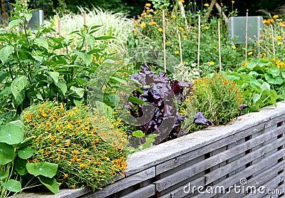 Cama levantada del jardín vegetal