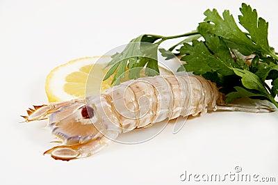 Camarão de Mantis