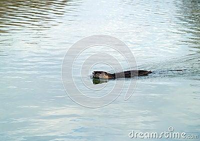 Camargue national wildlife reserve