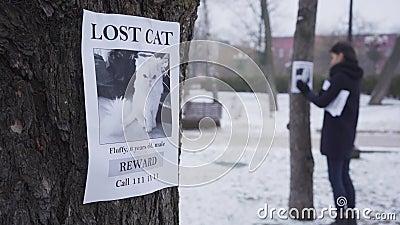Cambio de enfoque de la joven caucásica colgando el anuncio de mascota perdida en el árbol al fondo de un anuncio en el almacen de metraje de vídeo