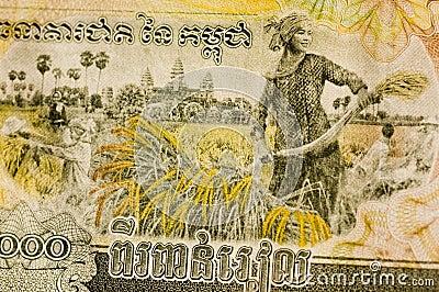 Cambodia Banknote Rice Harvesting