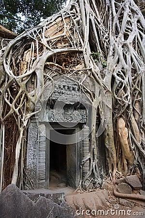 Cambodia - Ta Prohm Temple ruins in Angkor Wat