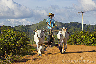 Cambodian oxcart Editorial Stock Image
