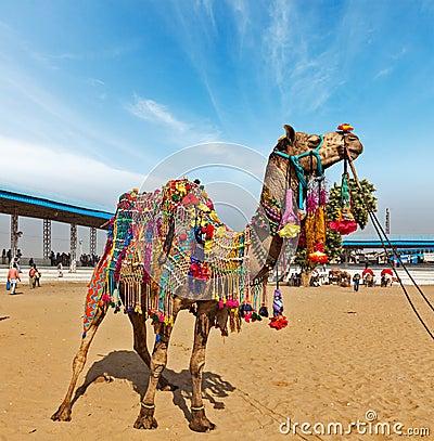 Free Camel At Pushkar Mela (Pushkar Camel Fair),  India Royalty Free Stock Photo - 33738045