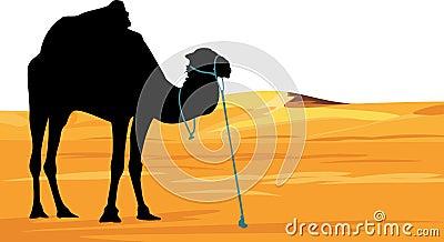 Camel on the background of desert landscape